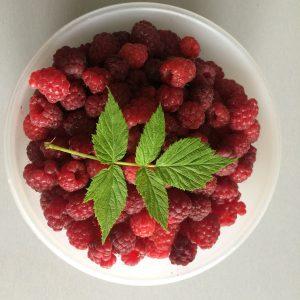 Petits fruits et grands plaisirs