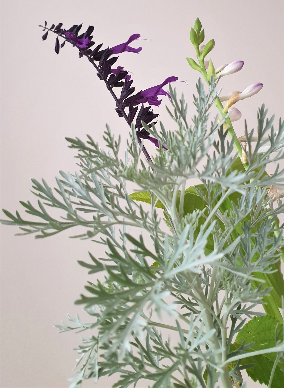 Bouquets grisés d'armoise