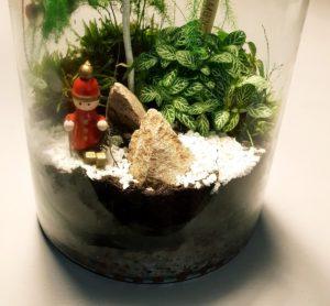 Un terrarium  ouvert