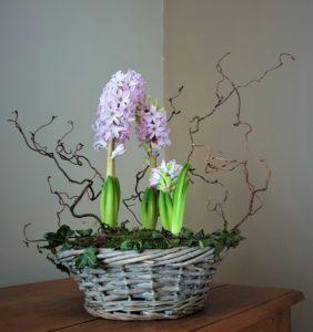 Corbeille de jacinthes