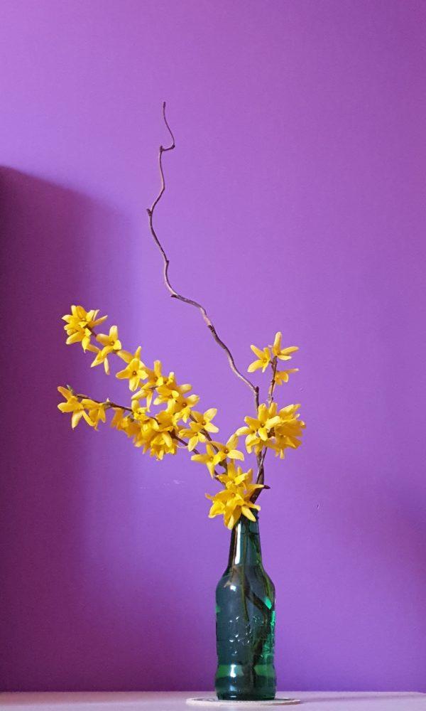 bouquet forsythia noisetier tortueux