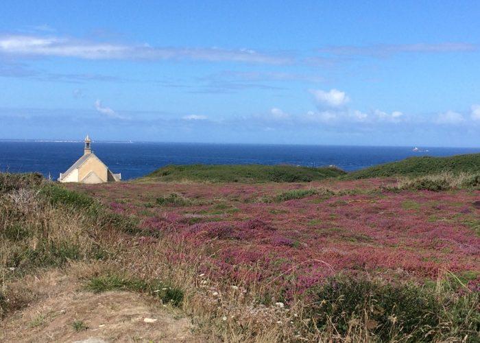 bruyères  sur lande bretonne