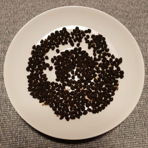 graines d'ipomée