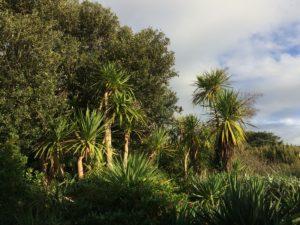 L'automne à l'Ouest : dernière chance au Jardin Botanique de Vauville