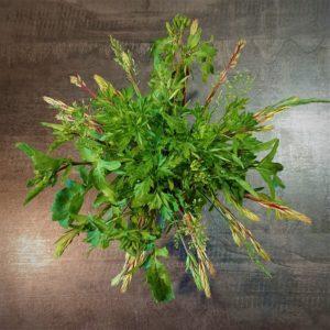 Bouquets verts