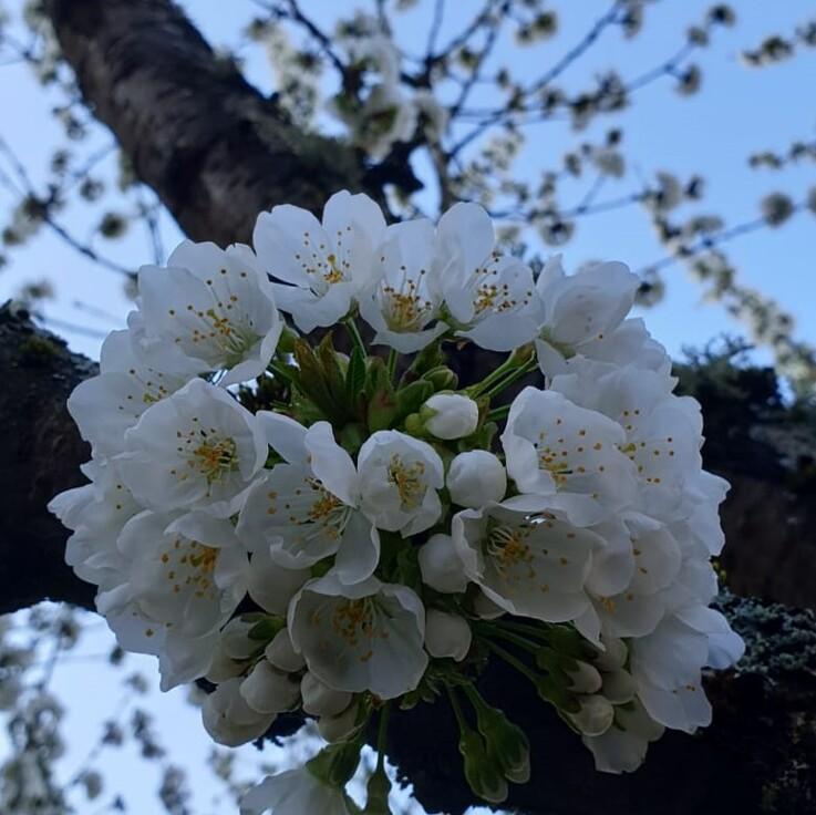 Calendrier floral de confinement.